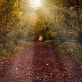 Cesta z lesa .....