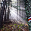 Slunce nad lesy