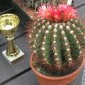 Výstava kaktusů,- Praha. Oceněný kaktus.