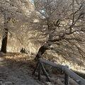 zima čaruje