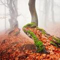 ...podzim v Krušných horách