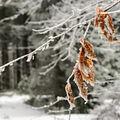 Zima se nevzdává