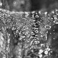 Pavučina s kapičkami vody