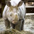 Miminko nosorožce