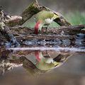 zelené zrcadlení