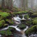 Šumavské potoky