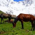 koně z Kavkazu