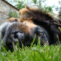 Čumák v trávě