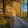 Cesta podzimem II