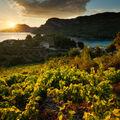 Výhled z vinic