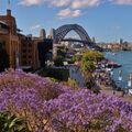 Pestrý život v Sydney