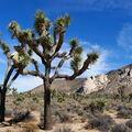 USA. California. Přírodní park Joshua Tree