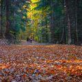 Podzimní výlet