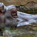 Hrošík se koupe :-)