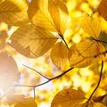 Podzim v bučině