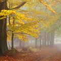 Podzimní nostalgie