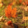 Podzimní II