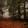 Lesní mlha přede mnou.....