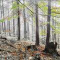 Lesní osvěžení