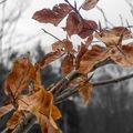 Zimní listy
