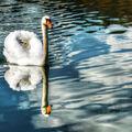 Klidná plavba