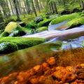 River symphony III.