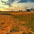 Podvečer v polích