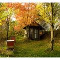 Podzim u včel....