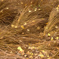 Podzim v trávě