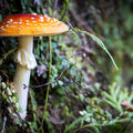 Na houbách