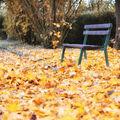 Podzim v parku ...