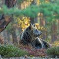 V lese jo v lese na jehličí...