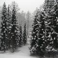 Zasněžená příroda