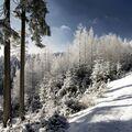 Zimní idylka