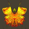 květní motýl