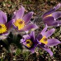 Jaro dělá pokusy ...