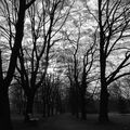 dopoledne v parku