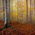 Z lesa