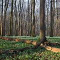 V Blucherově lese