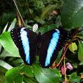 Blesková modř