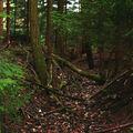 Lesní koryto, Svitavy