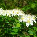 Jarní flóra