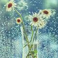 Broken Flowers VIII.
