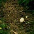 Zatúlané vajce