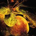 Jablko a moucha
