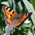 Šťastný motýl v zářícím slunci ...