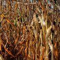 Barvy podzimu...