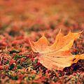 Nálada podzimu