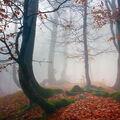 ...podzimní krušnohorský les