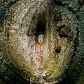 """Intime"" partie stromu"